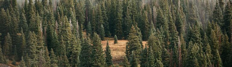 header_forestfortrees
