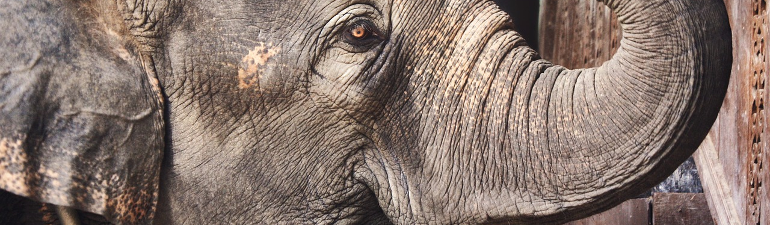 header-elephant